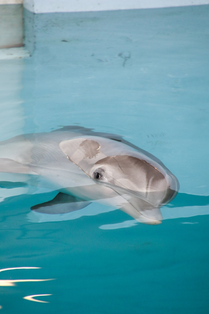 Clearwater Marine Aquarium, Winter, Dolphin, Dolphin tale,