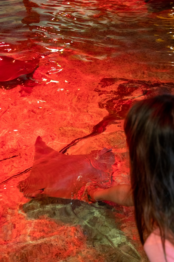sting ray, adventure aquarium, Camden, New Jersey, water, touch