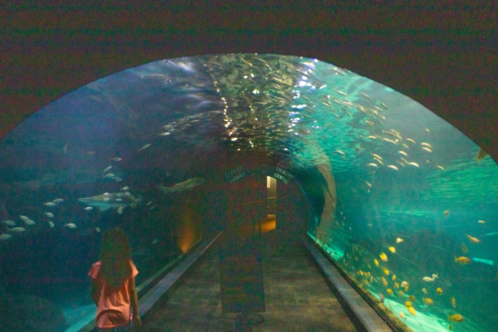 Shark Tunnel, Sharks, Underwater viewing, Camden, Adventure Aquarium, NJ, Philadelphia, Marine Life, Sea Life