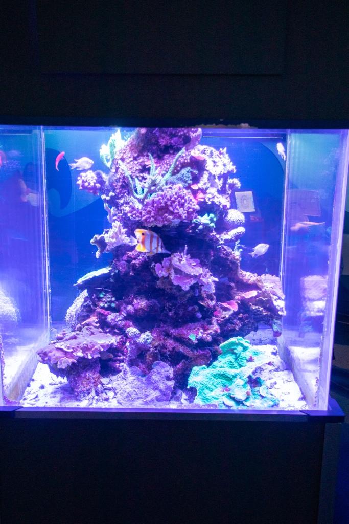 fish, tropical, aquarium, Camden, New Jersey, Marine Life, Sea Life
