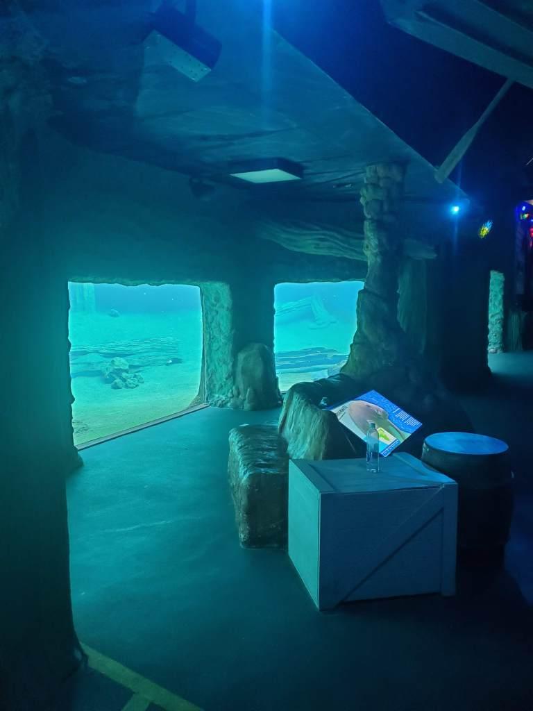 Manatee Mangrove, ZooTampa, Underwater viewing,