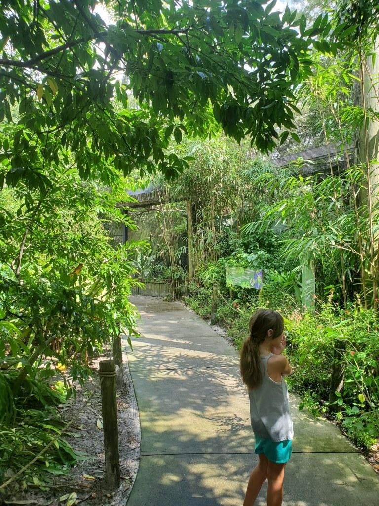 Aviary, ZooTampa, Toucans, tanagers, Florida, Hornbills,
