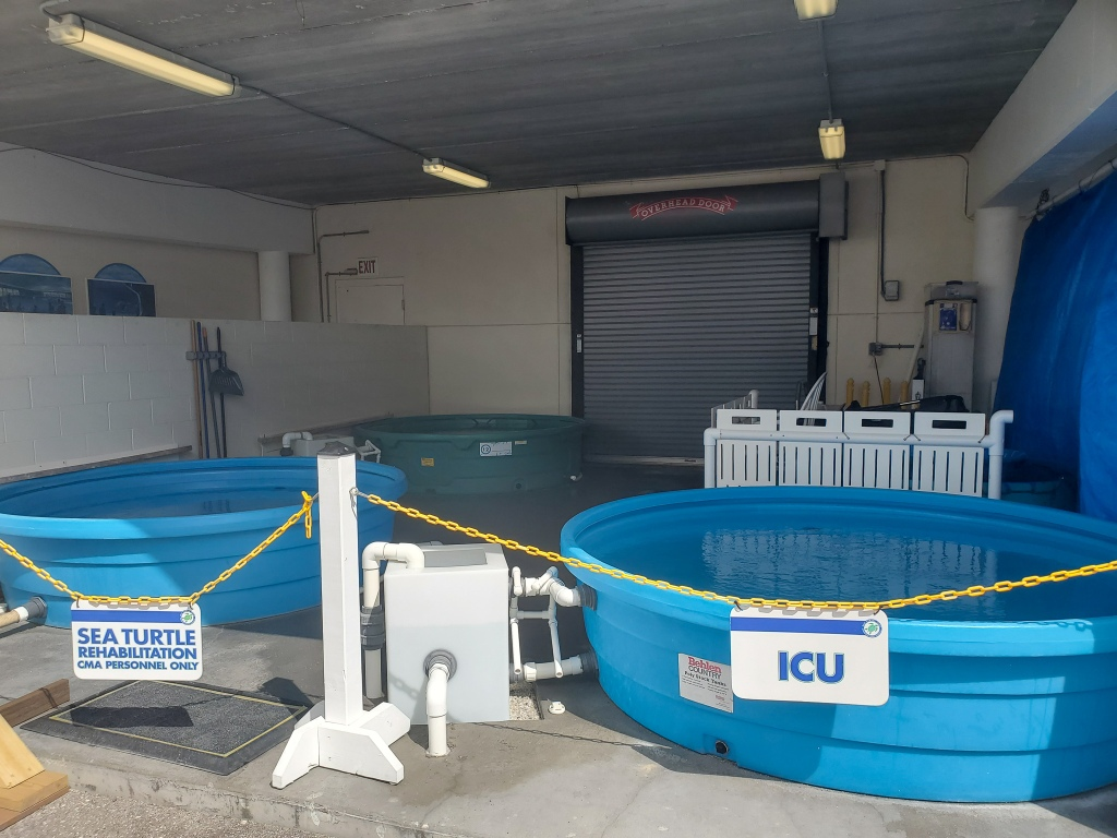Clearwater marine aquarium Rehabilitation area