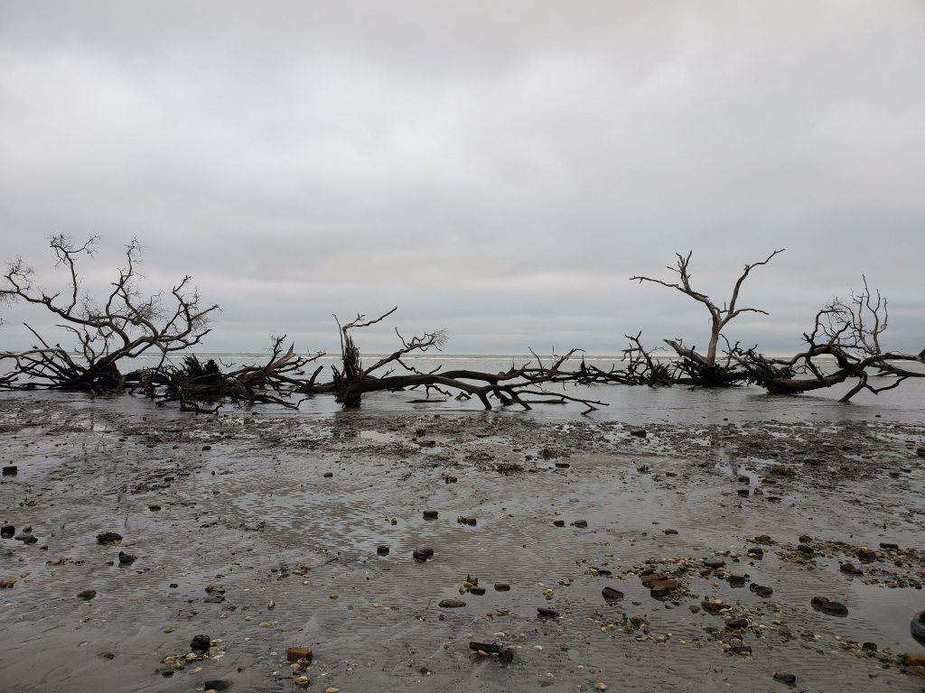 apocalyptic looking beach in South Carolina