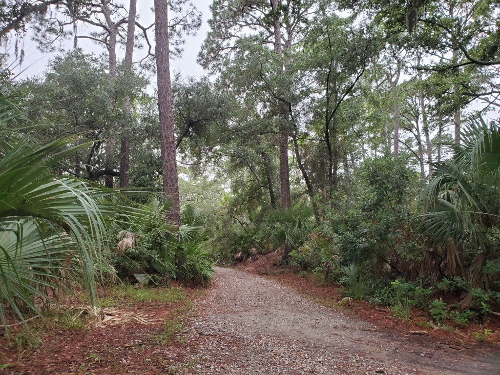 wooded walking in Hunting Island State Park in SC
