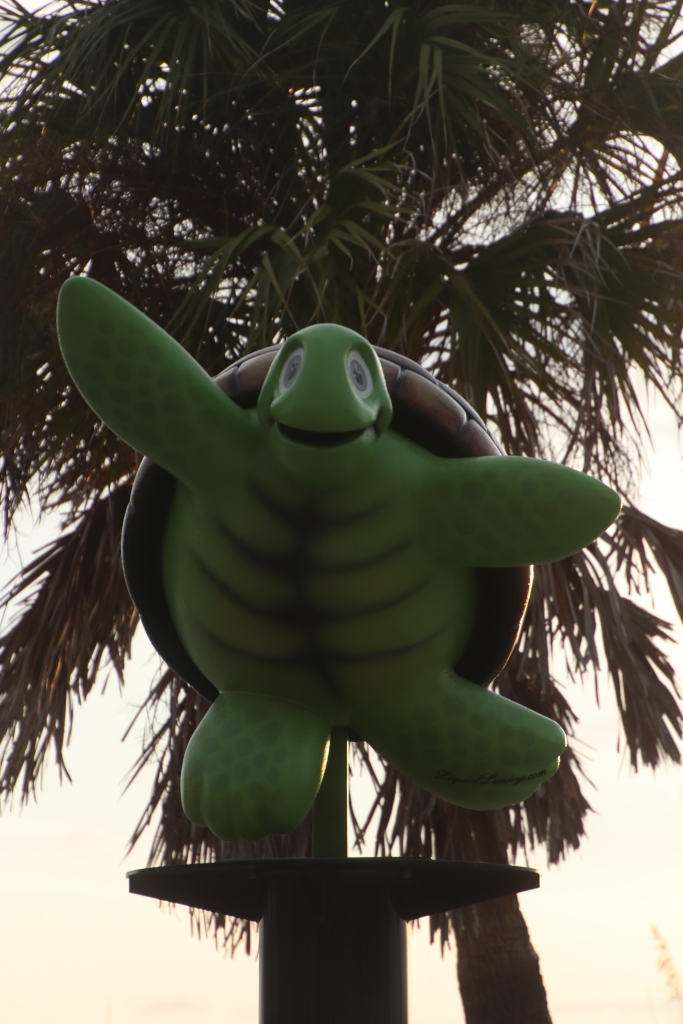 Turtle on the Clearwater Beach