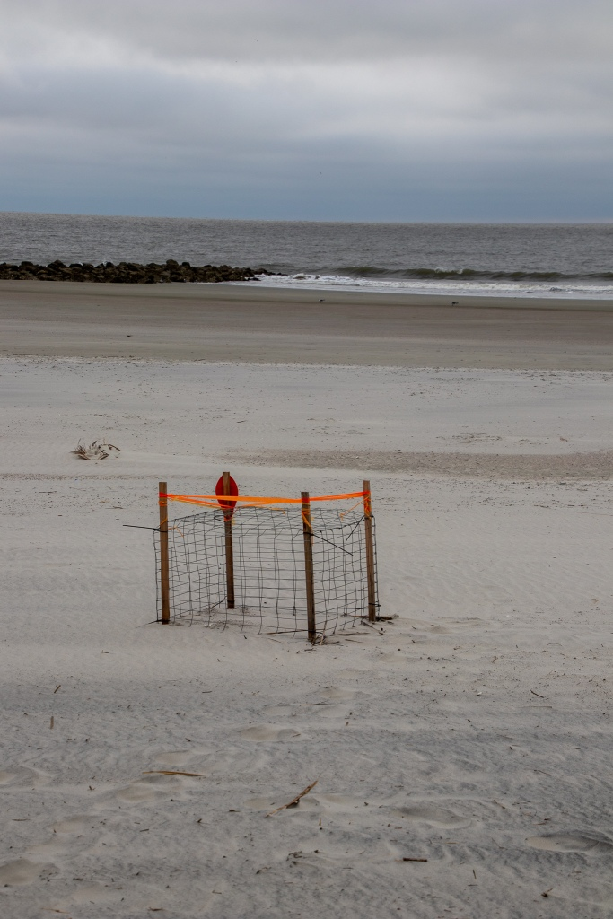 sea turtle nest on the beach
