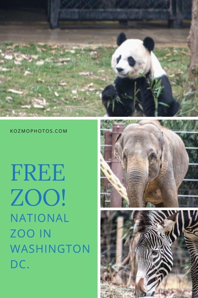 National Zoo, Free, Smithsonian, Washington DC, Capital, Animals,