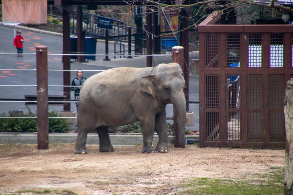 Elephants, National Zoo, Free, Smithsonian, Washington DC, Capital, Animals,