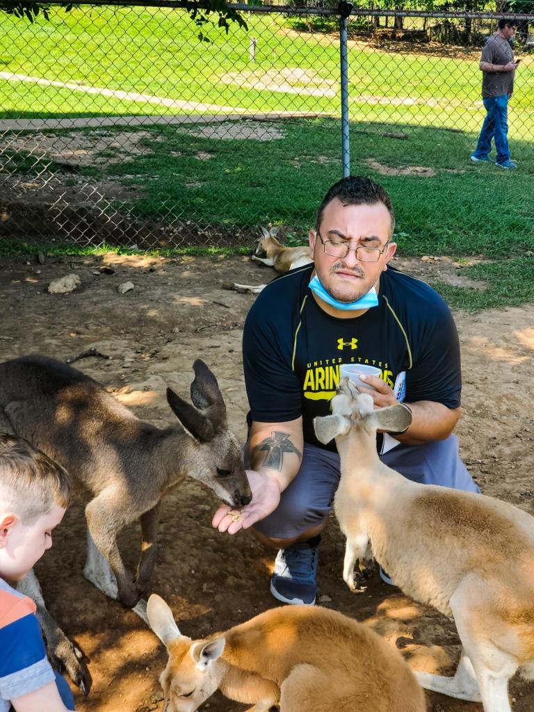 feeding kangaroos at Kentucky Down Under