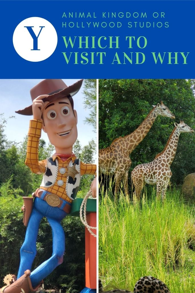 Should I visit Animal Kingdom or Hollywood Studios?