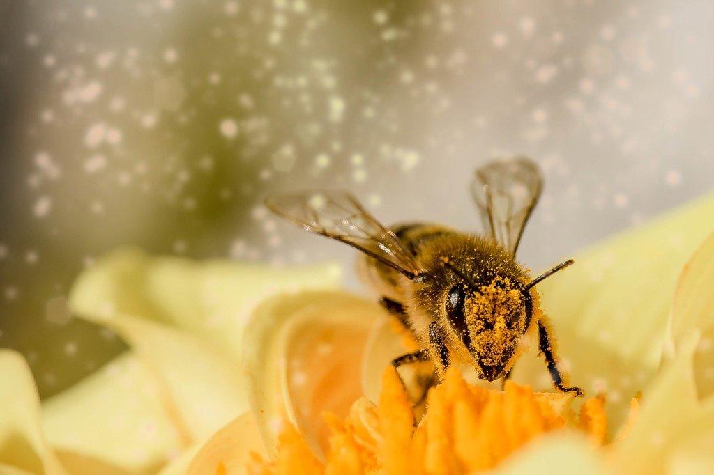 macro, bee, pollen, flower,