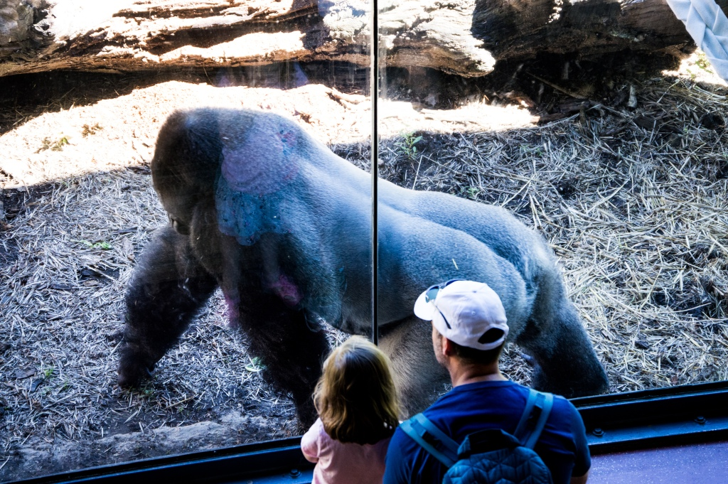 Philadelphia Zoo, Philly Zoo, Monkey, Ape, Dad and Daughter, Family friendly,